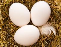 [몸에 좋은 음식] 달걀 이야기 ☞ 자세히 보기